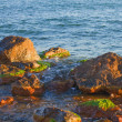 Sea weed rocks — Stock Photo