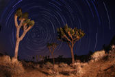 Night Shot of Star Trails in Joshua Tree Nationa — Stock Photo