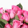 Beautiful Pink Roses With Water Drops — Stock Photo