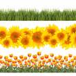 Tulips, Sunflowers and Grass Borders Springtime — Stock Photo #3083321