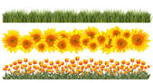 Tulips, Sunflowers and Grass Borders Springtime — Stock Photo