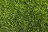 Perfect Green Grass Background or Texture — Stock Photo