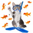 Stock Photo: Funny Image of Cat Fishing. Conceptually Analogous with Te