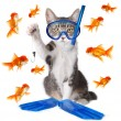 Stock Photo: Funny Image of a Cat Fishing. Conceptually Analogous with the Te