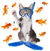 Funny Image of a Cat Fishing. Conceptually Analogous with the Te — Foto de Stock