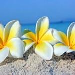 Flowers on the beach — Stock Photo #2860629