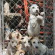 Puppies kept in bad conditions — Foto de Stock
