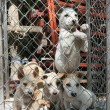Puppies kept in bad conditions — 图库照片