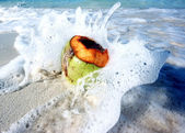 Coconut in waves — Stock Photo