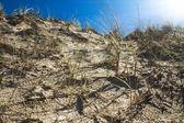 Dune-serien — Stockfoto