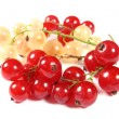 Fresh red and white currants — Stock Photo #2889708