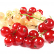 Fresh red and white currants - Stock Photo