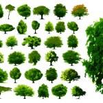 Vector trees — Stock Vector #3052782