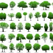Stock Vector: Vector trees