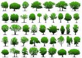 Векторные деревья — Cтоковый вектор