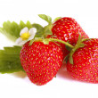 Isolated fruits - Strawberries — Foto de Stock