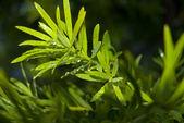 Natte groene bladeren — Stockfoto