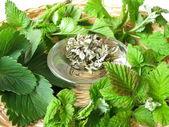 Tea herbs — Stock Photo