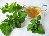 Blackberry-leaves tea — Stock Photo