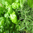 Green herbs - 