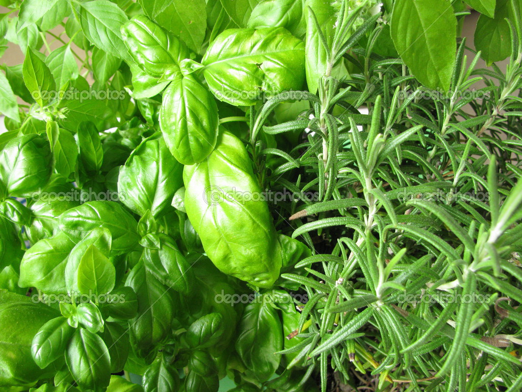 Basil, lemon basil and rosemary — Stock Photo #3133018