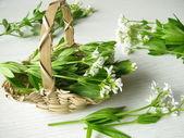 Woodruff – Galium odoratum — Stock Photo