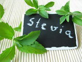 Sweet herb with nameplate — Stock Photo