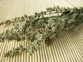 Dried Mugwort, Artemisia vulgaris — Stock Photo