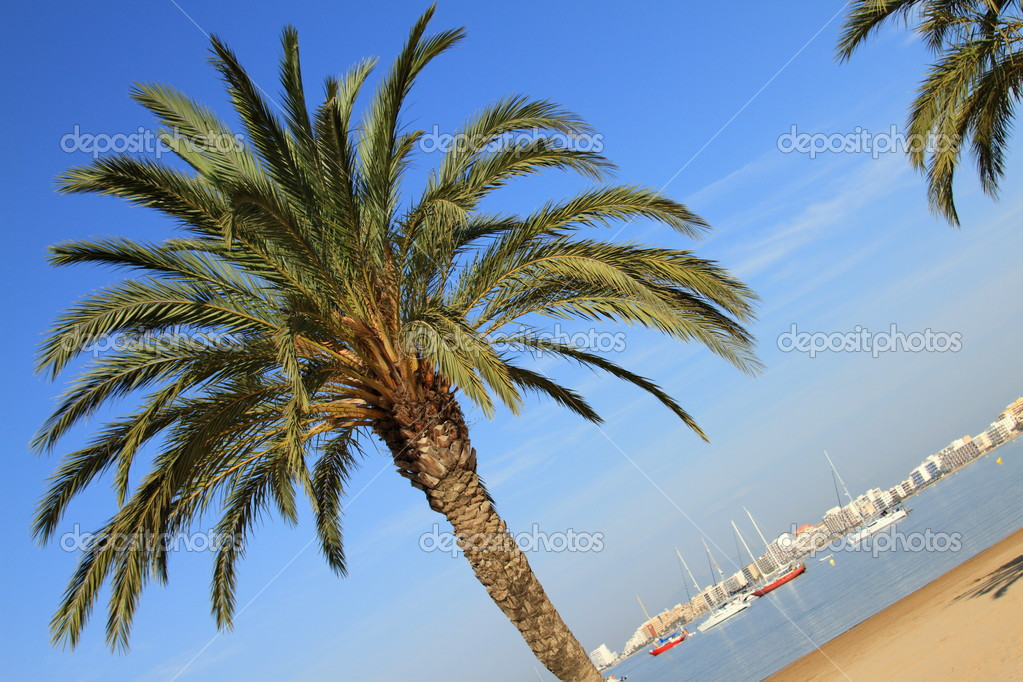 View of a beach of spain (rosas in costa brava) with a palm tree in the foreground — Stock Photo #3515251