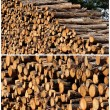 Logs — Stock Photo #3797463