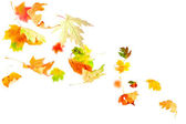 Falling Autumn Leaves — Stock Photo