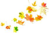 Falling Maple Leaves — Stock Photo
