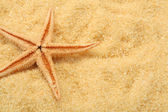 Starfish and beach sand — Foto de Stock