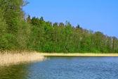 湖や木 — ストック写真