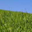 Grass — Stock Photo #2800969