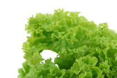 Crispy lettuce on white — Stock Photo
