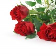 Roses — Stock Photo #3024088