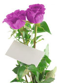 Purple roses with blank love note — Stock Photo