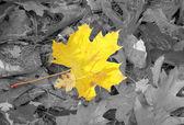 Autumn individuality — Stock Photo