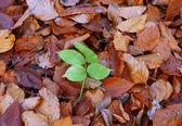 Autumn individualist — Stock Photo