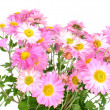 Chrysanthemums — Stock Photo #3085053