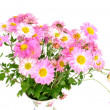 Stock Photo: Chrysanthemums