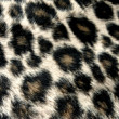 Panther pattern — Stock Photo