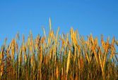 Grass blue sky in background — Stock Photo