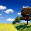 Stock Photo: Landscape with field and wind turbine