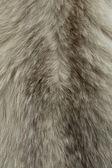 Fur texture — Stock Photo