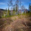 Forest destroyed by the wind — Stock Photo