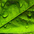 Close-up of a green leaf — Stock Photo #2887097