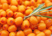 Sprinkle of sea buckthorn berries — Stock Photo