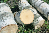 Sawn birch logs — Stock Photo